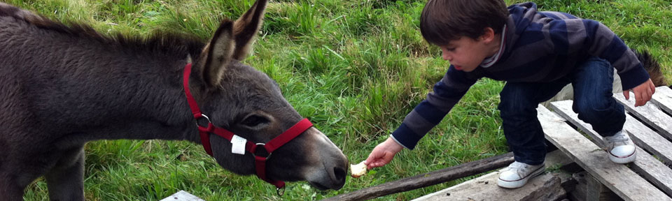 Les Pieds dans l'Herbe – Chambres d'hotes et gîtes – Rosporden – Finistère Bretagne – animaux enfants